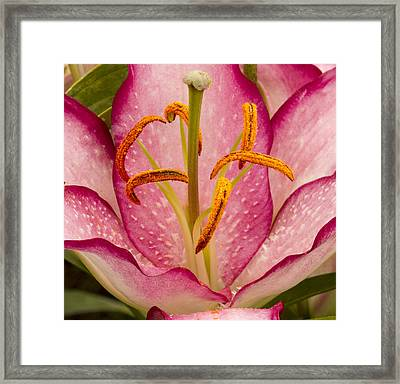 Pretty In Pink Framed Print by Jean Noren