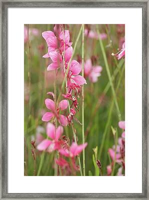 Pretty In Pink Framed Print by Joe Bledsoe