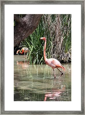 Framed Print featuring the photograph Pretty In Pink by John Telfer