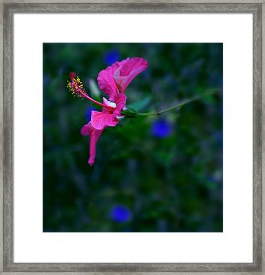 Pretty In Pink Framed Print by Julian Cook