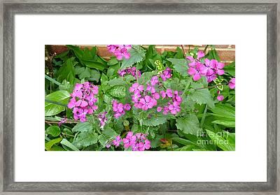 Pretty In Pink  Framed Print by Julie Koretz
