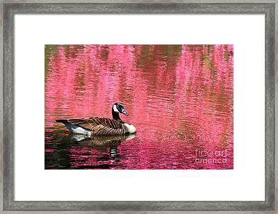 Pretty In Pink Framed Print by Leslie Kirk