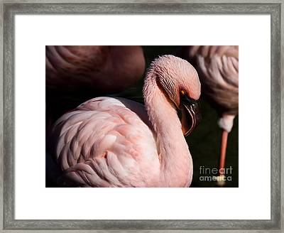 Pretty In Pink Framed Print by Lisa L Silva