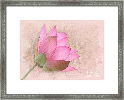 Pretty In Pink Lotus Blossom Framed Print