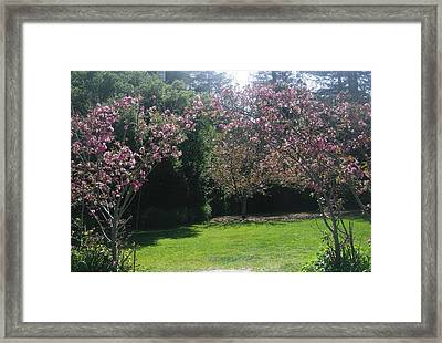 Pretty In Pink Framed Print by Marian Jenkins