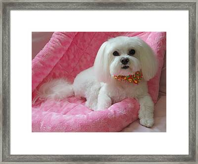 Pretty In Pink Framed Print by Mary Beth Landis