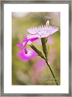 Pretty In Pink Framed Print by Pamela Gail Torres