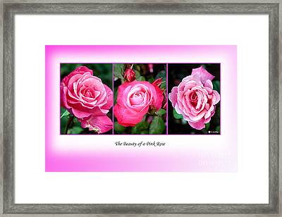 Pretty In Pink Roses Framed Print by Jo Collins