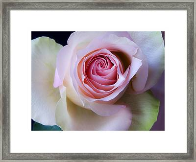 Pretty In Pink - Roses Macro Flowers Fine Art  Photography Framed Print