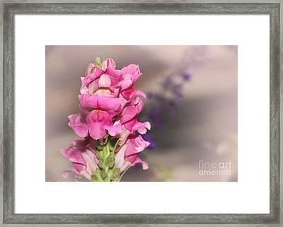 Pretty In Pink Snap Dragons Framed Print by Sabrina L Ryan