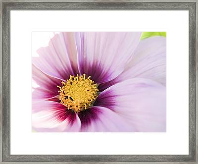 Pretty In Pink Framed Print by Tara Lynn