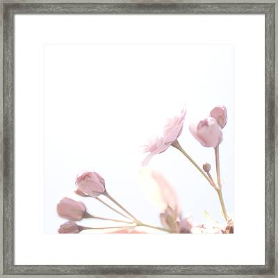 Pretty In Pink - The Dreamer Framed Print
