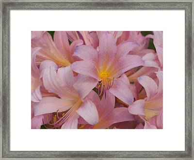 Pretty In Pink Framed Print by Virginia Forbes