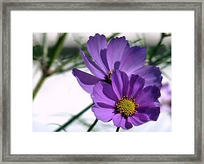 Pretty In Purple Framed Print by Janice Drew
