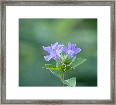 Pretty In Purple Framed Print