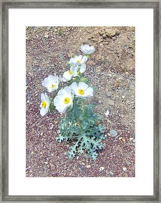 Pretty In White Framed Print by Marilyn Diaz
