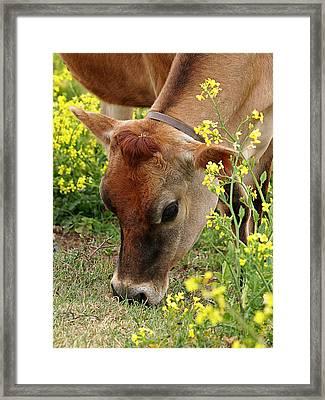 Pretty Jersey Cow - Vertical Framed Print by Gill Billington