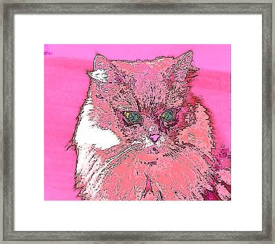 Pretty Kitty In Pink Framed Print by Kathy Budd