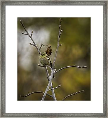 Pretty Little Bird Framed Print
