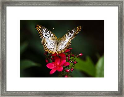 Pretty Little Butterfly  Framed Print by Saija  Lehtonen