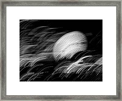 Framed Print featuring the photograph Pretty Little Cosmo - 6 by Larry Knipfing