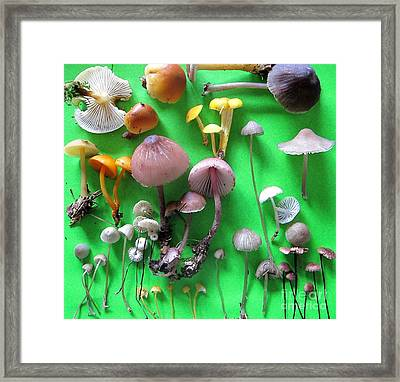 Pretty Little Mushrooms Framed Print