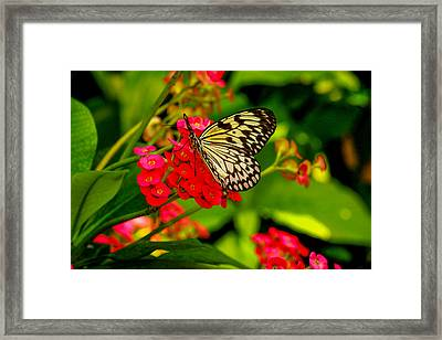 Pretty On Pink Framed Print by Robert Hebert