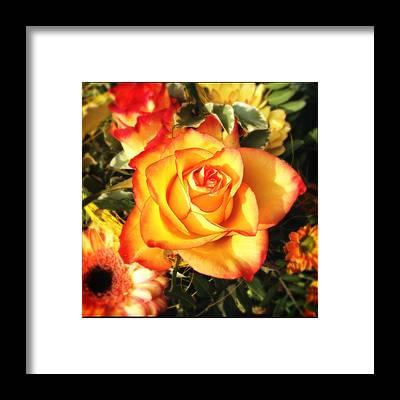 Designs Similar to Pretty orange rose