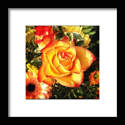 Designs Similar to Pretty Orange Rose