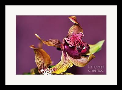 Orchid In Flight Framed Prints