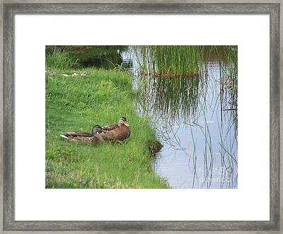 Framed Print featuring the photograph Mated Pair Of Ducks by Eunice Miller