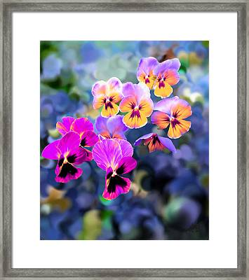 Pretty Pansies 3 Framed Print by Bruce Nutting