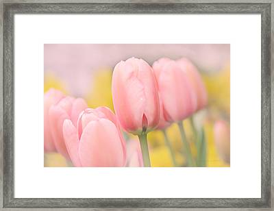 Pretty Pastel Pink Tulip Flowers Framed Print by Jennie Marie Schell