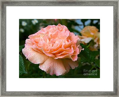 Pretty Peach Peony Flower Framed Print