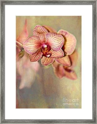 Pretty Peach Phalaenopsis Orchids Framed Print by Sabrina L Ryan