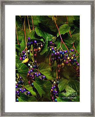 Pretty Pearls Framed Print by RC deWinter