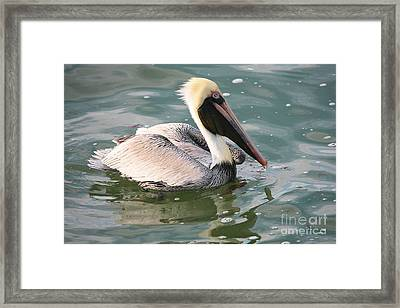 Pretty Pelican In Pond Framed Print