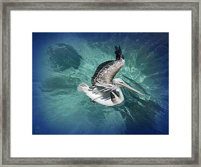 Framed Print featuring the photograph Pretty Pelican by Pennie  McCracken