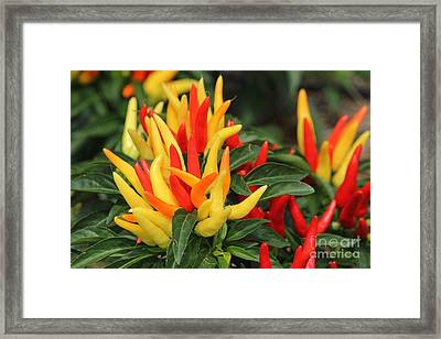 Pretty Peppers Framed Print