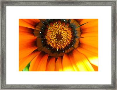 Pretty Petals 3 Framed Print