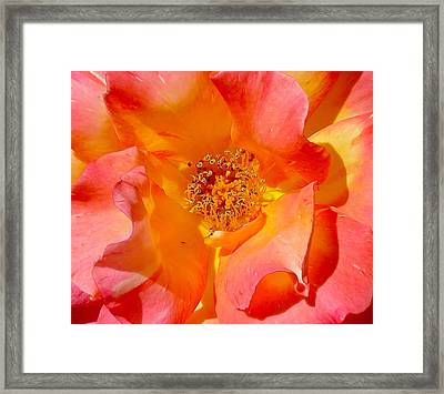 Pretty Petals Framed Print by Denise Mazzocco