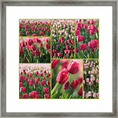 Pretty Pink And Green Tulips Collage Framed Print by Carol Groenen