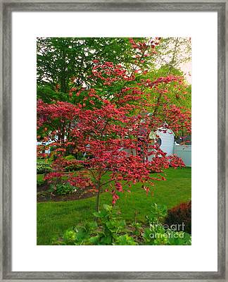 Framed Print featuring the photograph Pretty Pink Beech Tree by Becky Lupe