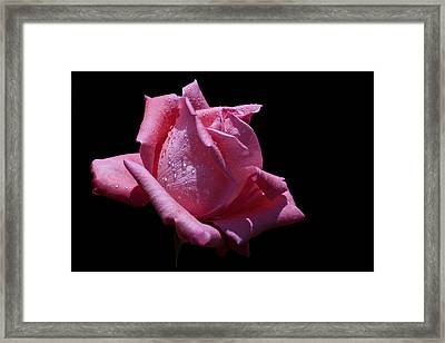 Framed Print featuring the photograph Pretty Pink by Doug Norkum