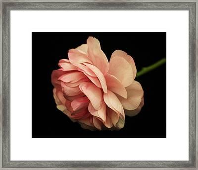 Pretty Pink Flower Framed Print by Carol Welsh