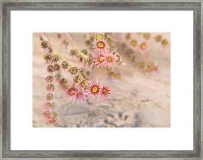 Pretty Pink Flowers Framed Print by Matthias Hauser