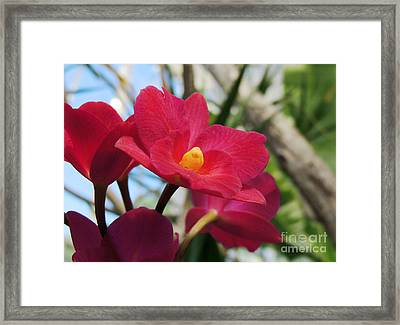 Framed Print featuring the photograph Pretty Pink by Kristine Merc