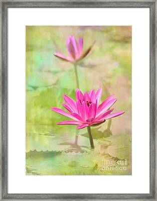Pretty Pink Ladies Framed Print by Sabrina L Ryan