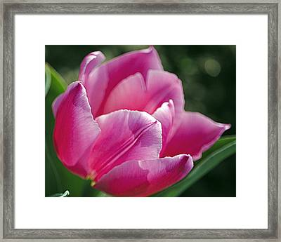 Pretty Pink Lady Framed Print by Leslie Cruz