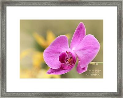 Pretty Pink Phalenopsis Orchid Framed Print by Sabrina L Ryan